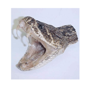 Genuine large Rattlesnake hat pin open mouth